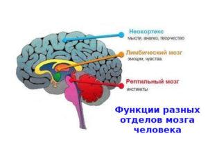 картинка Помощь психотерапевта мозг