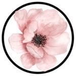 фото цветок